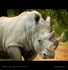 Rhinoceros (Andrea Costa Creative) Tags: desktop wallpaper macro art closeup illustration photoshop canon painting creativity design paint graphic postcard creative socialnetwork shooting concept ideas hdr facebook comunication postprocessing photoretouching areyouready andreacosta