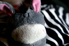 Natalia. (krisover) Tags: cute souvenir burro chaveiro