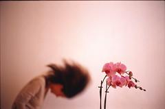Blume (R.O.Y.G.B.I.V.) Tags: flower phalaenopsis orchidaceae bloom kodakelitechrome100 mothorchids leicasummicron50mmf20v leicam6ttllhsa