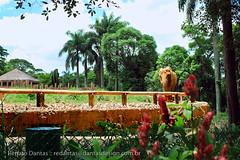 IMG_7928 (dantasdesign) Tags: brazil brasil sãopaulo zoológico paulo são cidades sopaulo zoolgico