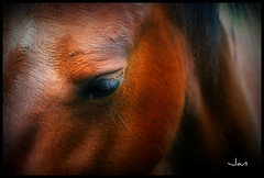 The eyes are the mirror of the soul (brynmeillion - JAN) Tags: horse animal wales eyes bravo cymru chestnut ceredigion picnik ceffyl naturesfinest llygaid nikond80 platinumphoto anawesomeshot thesuperbmasterpiece anifael