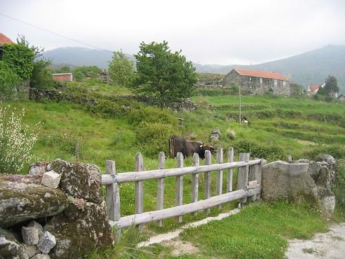 Lamas-de- Olo