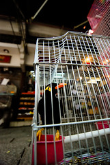 bird birdcage hongkong market caged mongkok