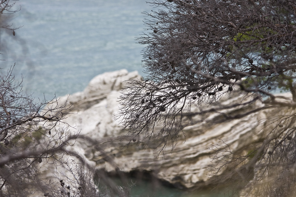 Cliff with trees
