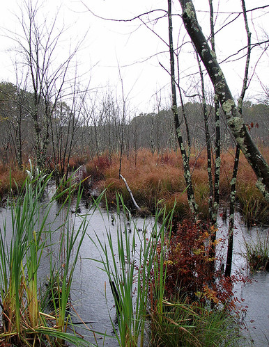 Bog in the Rain