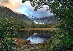 peter's pool (Daniel Murray (southnz)) Tags: park sunset newzealand lake fern reflection tree ice water pool forest landscape pond scenery dusk glacier tai national franz nz josef southisland peters westland southnz poutini