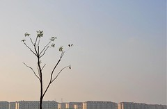 at the hour of dawn... (Maggie's World ...) Tags: light tree buildings dawn shanghai solitary quotation abdulbaha almostbare atthehourofdawn eyefromthebike fromaprayer