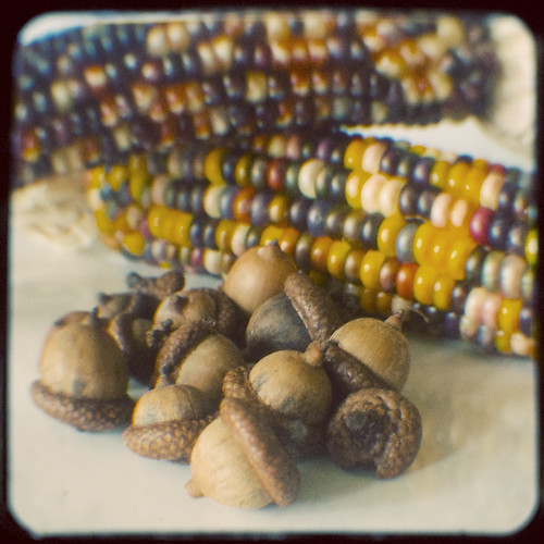 280:365 Indian corn and acorns