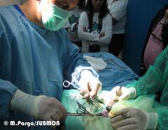 Operación quirúrgica para extraer un anzuelo y el sedal de una tortuga