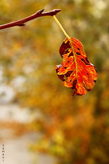 Leaf (seyed mostafa zamani) Tags: life autumn color tree nature loss death leaf colorful iran iranian             marand