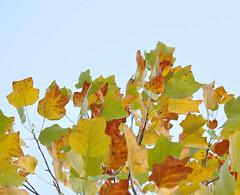 高見 Leaves