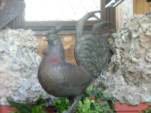Itallian Rooster