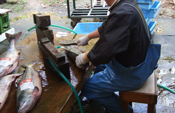 The processing of the salted salmon