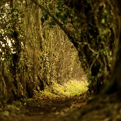 The secret tunnel (andrew evans.) Tags: lighting wood morning trees light england tree nature fairytale forest sunrise landscape golden countryside kent woods nikon warmth tunnel calm wonderland magical 70200 f28 enchanted d3