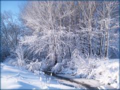 Like a winter wonderland (moodyfan (Julie)) Tags: trees winter snow stream blizzard frosted tistheseason heavysnow supershot abigfave diamondclassphotographer flickrdiamond daarklands newgoldenseal