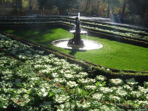 Garden of Beautiful Brassicas