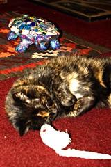 The fuzzy thing between Scylla and Charybdis (MadameSnippet) Tags: cat mouse turtle kitty toymouse charybdis scylla mignonne stuffedmouse canon450d scyllaandcharybdis