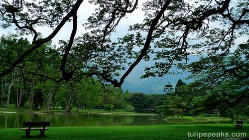 Lake Garden, Taiping