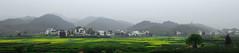 / wuyuan, jiangxi (to ang, with love) Tags: rapeseed  conola wuyuanjiangxichinathemostbeautifulcountrysideinchina