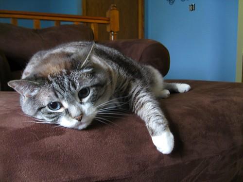 emo cat is emo (154/365)