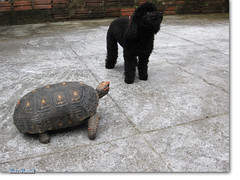 Ol... (Florzinha e Pretinha) - Sbado Animal (BeteMaciel) Tags: cachorro tartaruga