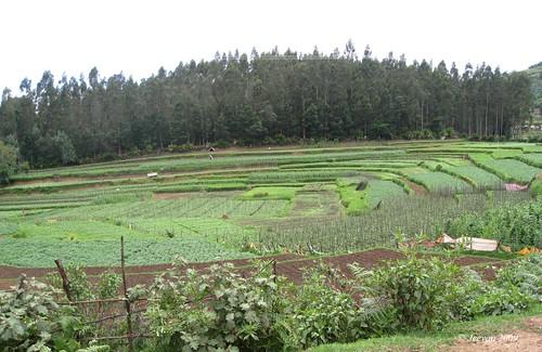 farming playground