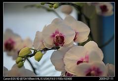 20090711_31礁溪金車蘭花園