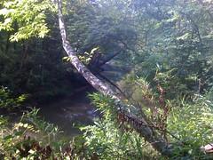 Bend In Shoal Creek
