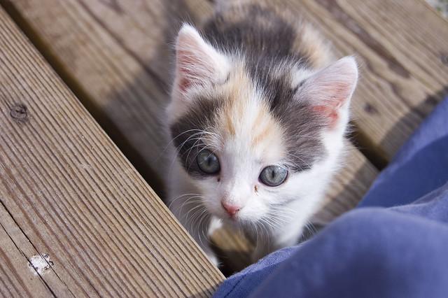 Kitten. :)