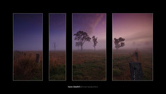 'The whole is greater than the sum of its parts' ([ Kane ]) Tags: trees sky grass fog fence landscape dawn framed australia brisbane qld queensland kane gledhill 50d kanegledhill epicmissions wwwhumanhabitscomau kanegledhillphotography