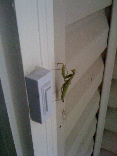 Doorbell Bug