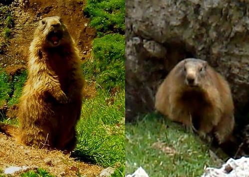 marmotte catalitiche