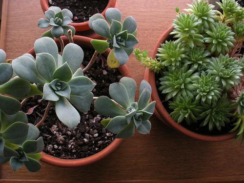 Plant Pets