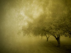 Morning's Fog (DaraDPhotography) Tags: trees texture nature fog landscape golden scenery best mias lightroom cs4 idream thesecretlifeoftrees sharingart artistictreasurechest miasbest visionqualitygroup flickrvault sailsevenseas florabellaarttextures thepyramidgroup