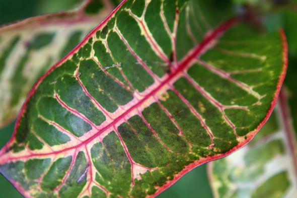 092609_leaf_04