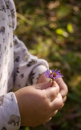 256:365 Lucas's purple flower