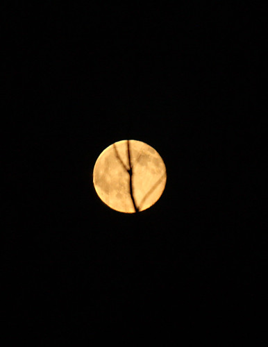 full moon with a tree branch