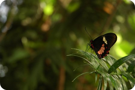 Butterfly exhibit at Carleton University