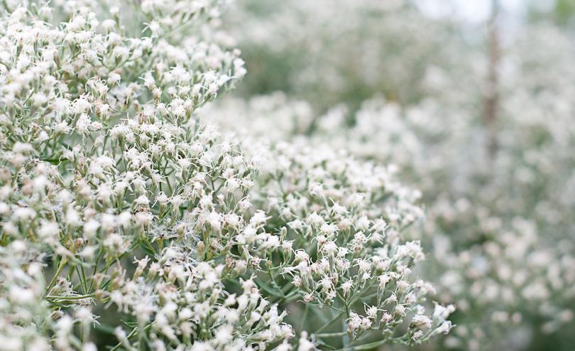 Fog of Flora