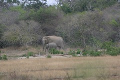 Aurgam Bay - Sri Lanka