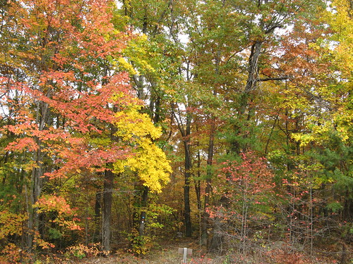 Vivid colors near hike's end