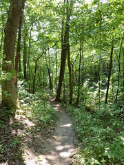 Trail at Palisades (sfgamchick) Tags: statepark illinois savanna illinoisstatepark mississippipalisades mississippipalisadesstatepark