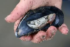 ezra-shell-claw