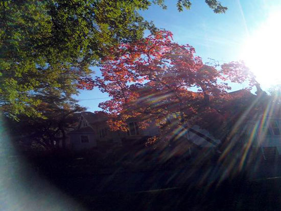 Sun Through Fall Leaves (Click to enlarge)