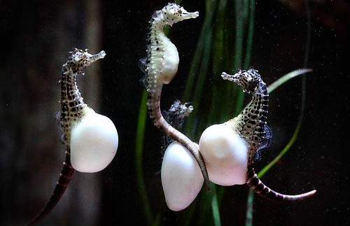 Animal pictures of the week sea horses