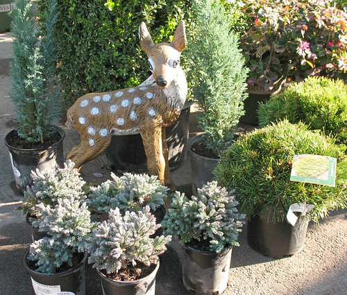 A deer enjoys being surrounded by holiday conifers.