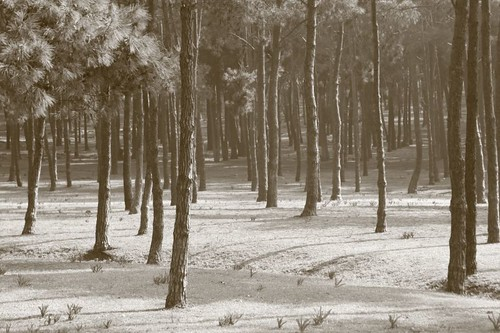 Plantation north of Rabat...