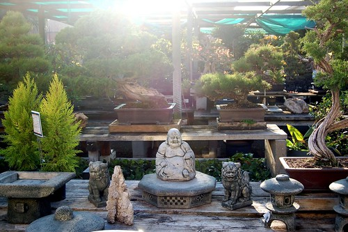 bonsai nurseries