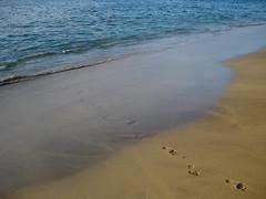 Pinguino's Penguinprints (Brian Russo) Tags: sand footprints kauai pinguino keebeach