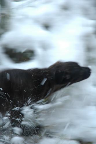 Giocare nelle neve